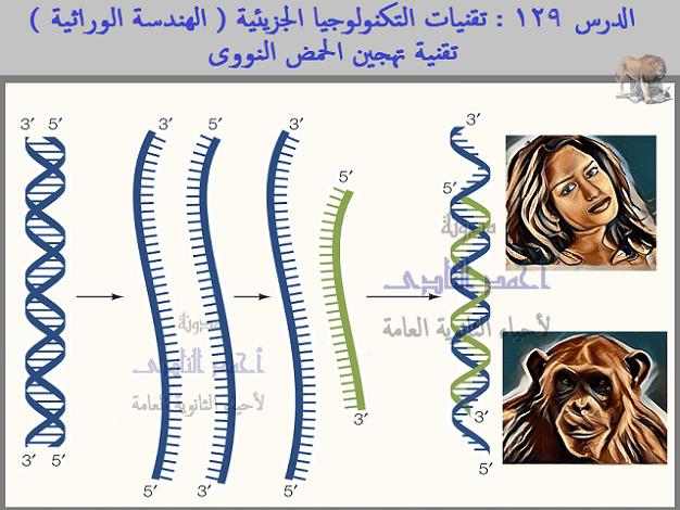 تقنيات التكنولوجيا الجزيئية ( الهندسة الوراثية ) - تقنية تهجين الحمض النووى - الثالث الثانوى - أحياء الثانوية العامة