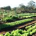 Comunidade da zona rural é contemplada com projeto piloto de Horta Comunitária