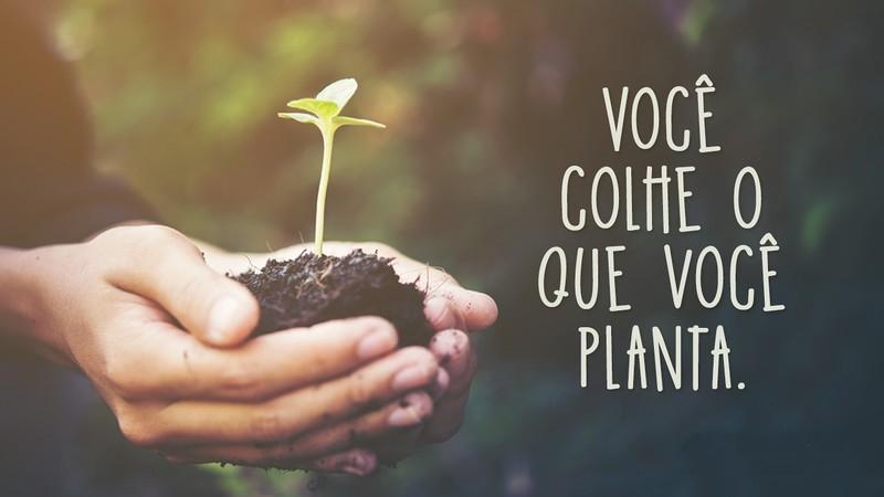 A Lei da Colheita: Você Colhe o Que Você Planta