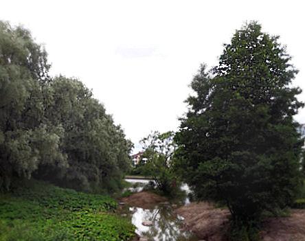 Kuvassa jokivarren vihreyttä puissa