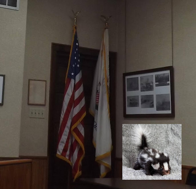Skunks at the Village Board Meeting September 19 2017, Metamora Herald