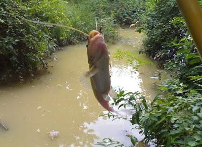 Kinh nghiệm câu cá-Mồi câu cá-Thời tiết để đi câu