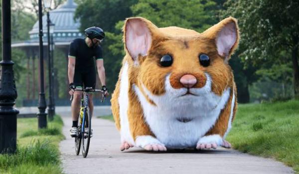 Imagens engraçadas - Hamster gigante