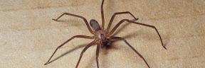 Gigitan Laba-laba Tidak Beracun