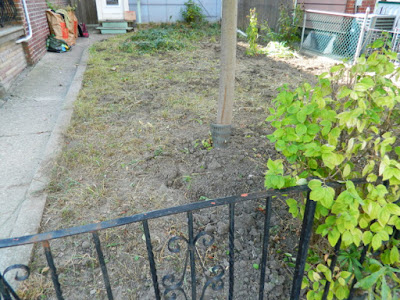 Little Italy Fall Front Garden Cleanup After by Paul Jung Gardening Services--a Toronto Organic Gardener