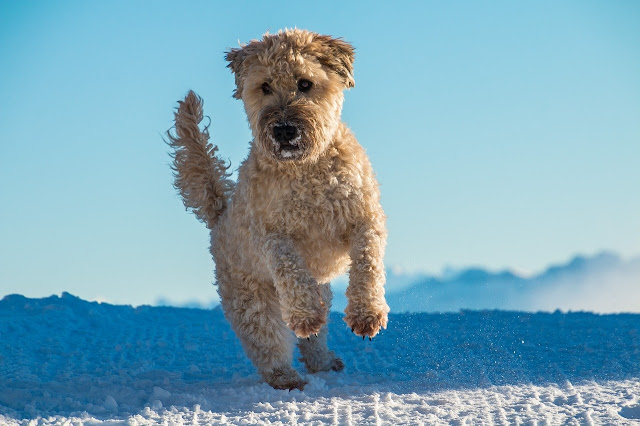 Top Medium Sized Dog Breeds in The World