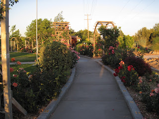 Paved pathway with trellised archways and planted flowers on the sides.