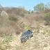 Veículo sai da pista e desce barranco na PE-263, na zona rural de Itapetim