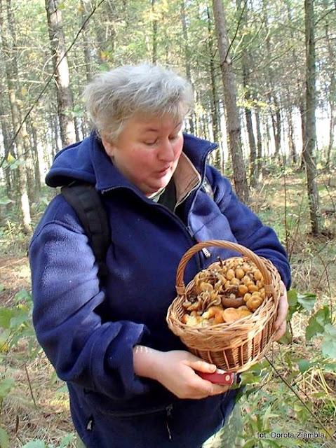 maslaki, grzyby gatunkami, grzyby jadalne, atlas grzybow, grzybobranie, na grzyby, ponidzie