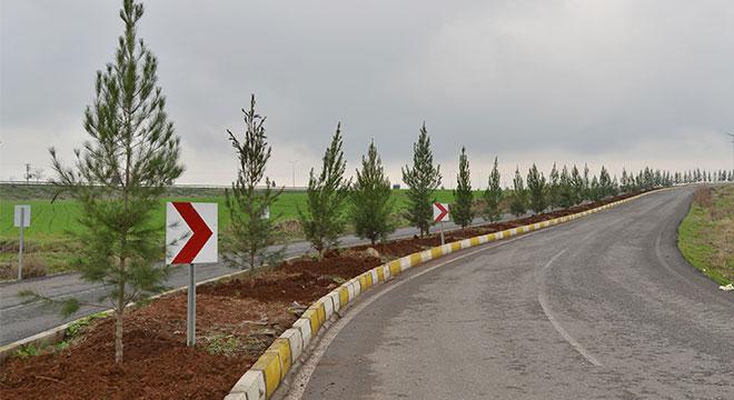 Diyarbakır Bağıvar Caddesi ağaçlandırıldı
