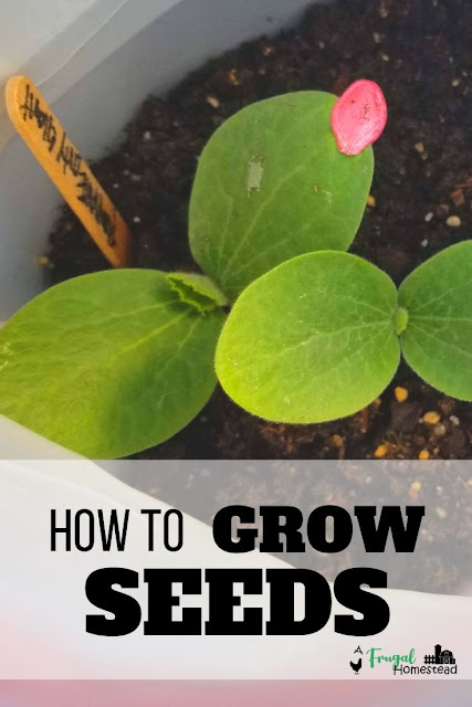 Learn to quickest and easiest way to start seeds outside for a great years crop.