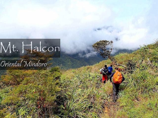 Mt. Halcon