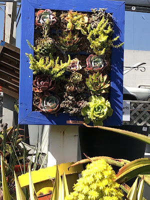 blue wood frame holds succulents in boxes