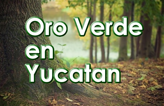 En Yucatan lugar del Oro Verde