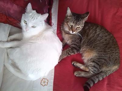 Un blog de gatos