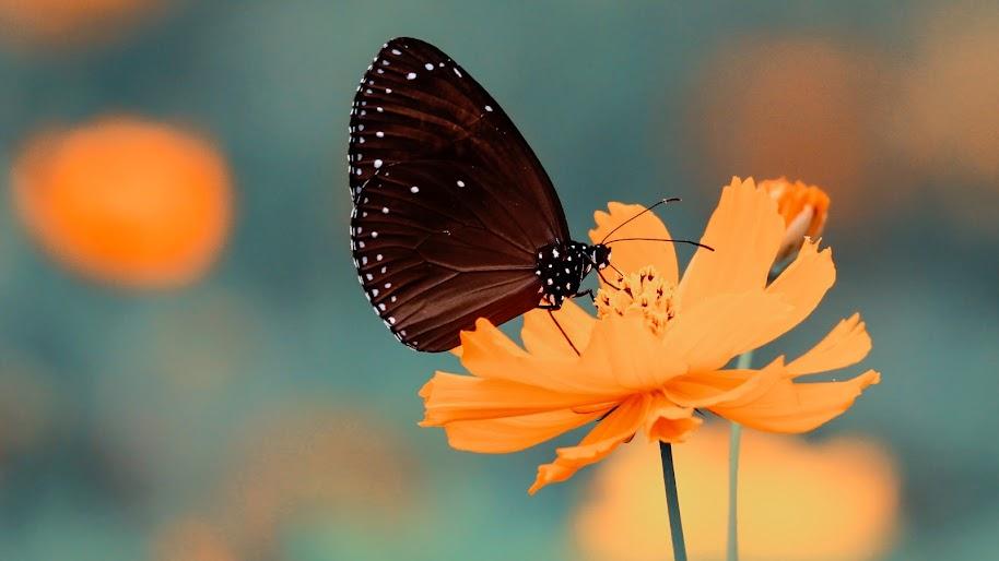 Flower Butterfly 4k Wallpaper 37