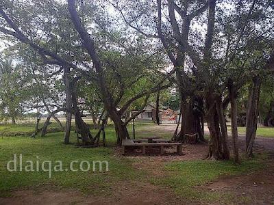 di bawah pohon rindang