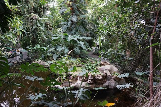 Jardin des Plantes - Serre des forêts tropicales humides
