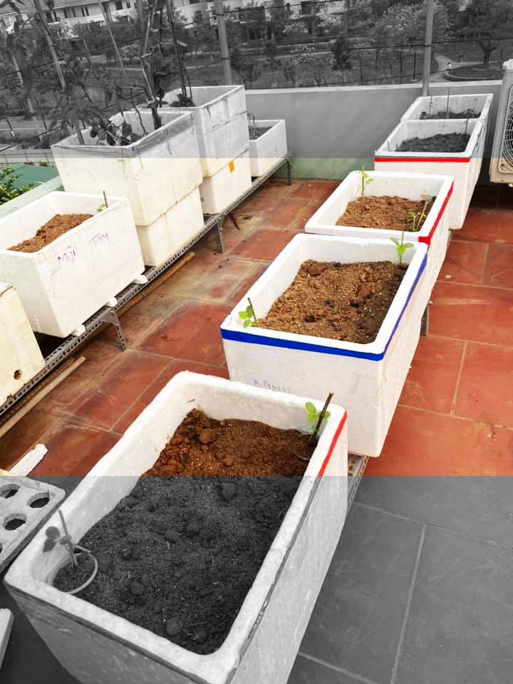 Thùng xốp bán thủy canh đã hoàn thành và chuẩn bị trồng các loại rau