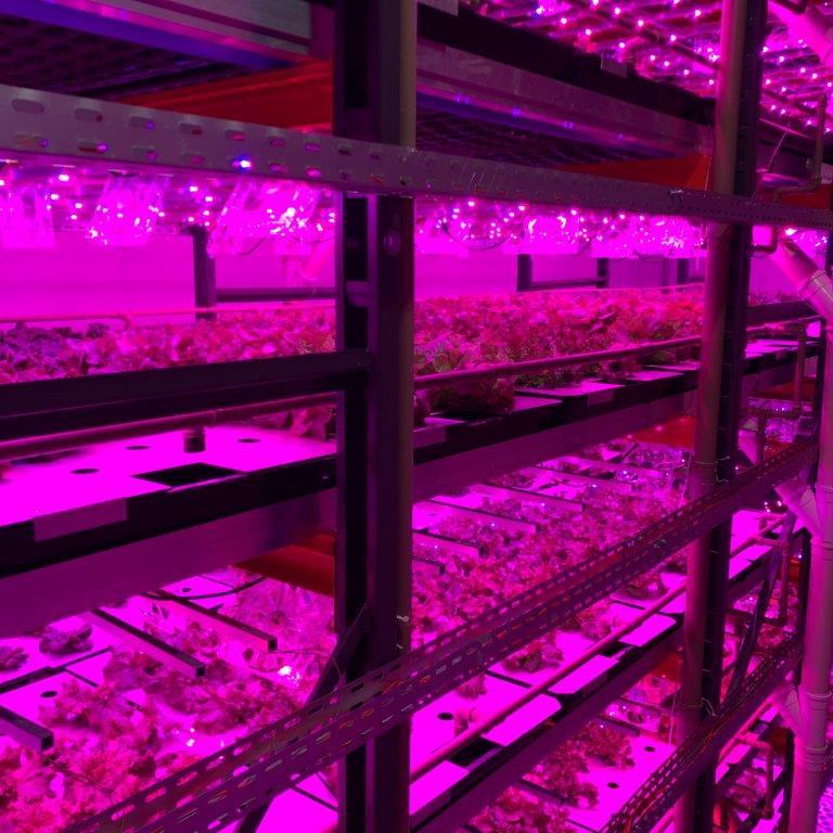 Do plantio direto para a mesa: fazenda urbana vertical, Pink Farms, lança Delivery em São Paulo