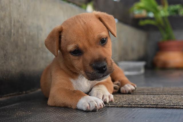 Doggie Peanut Butter Mini Cakes