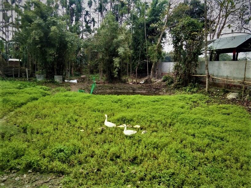 assamese life style - Assam village field