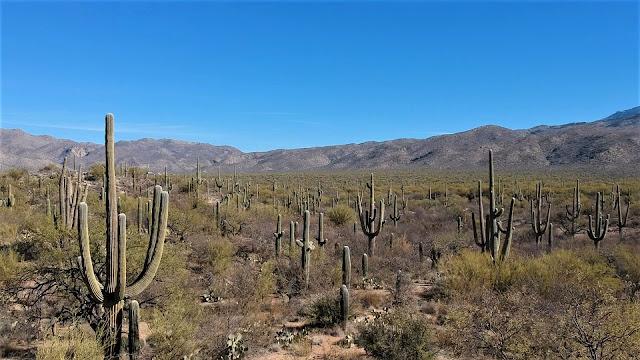 saguaro east national park arizona