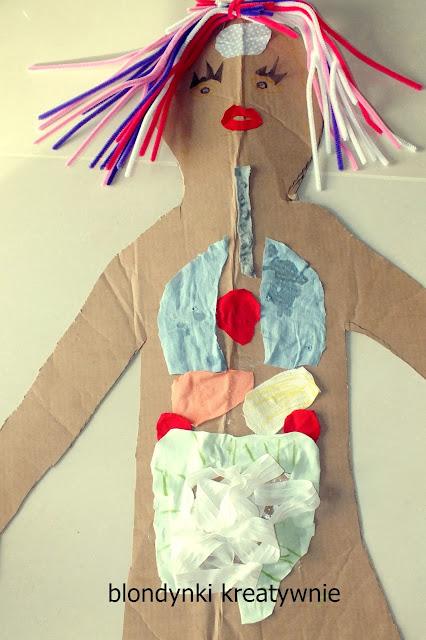 Anatomia z materiału