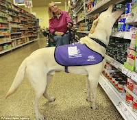cães deficientes