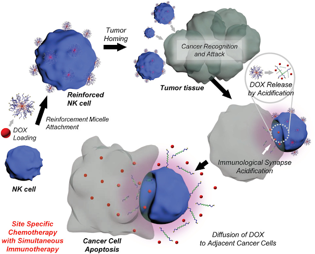 """Researchers Create """"Assassin"""" Cells Armed With Anticancer Drugs to Kill Cancer Masses"""