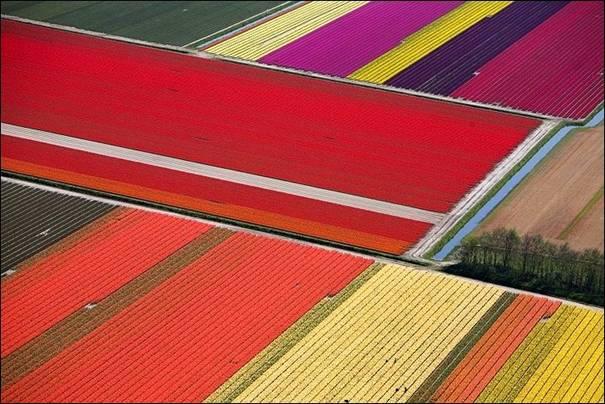 مزارع الزهور image022-770934.jpg