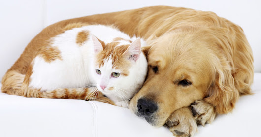 CAN CATS AND DOGS GET ALONG ?