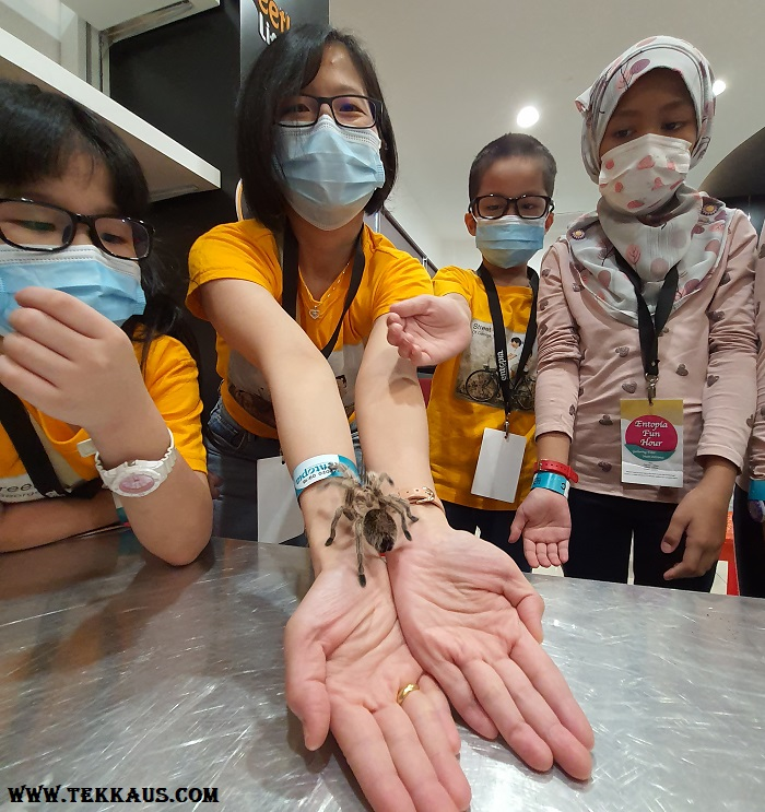 Fun Hour at Entopia Penang-Tarantula Venomous