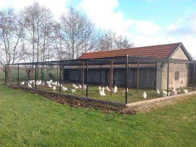 Semi intensive poultry housing