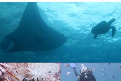 Dive Nusa Penida, Manta Ray, Sunfish, Turtle with Penida Dive Adventure