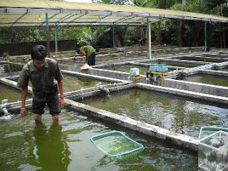 Proposal Pengajuan Kolam ikan