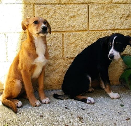 adoptar cachorros en malaga