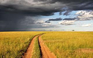 African Plain Photo by Pop & Zebra on Unsplash