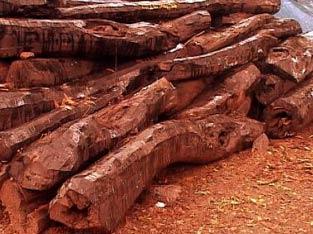 செம்மரம் மருத்துவ பயன் - chemmaram maruthuva payan -  semmaram maruthuva payan Red sandal wood  Botanical name: Aphanamixis polystachya Common name:  Pithraj Tree Vernacular name: செம்மரம் sem-ma-ram மண்ணிரல்  செம்மரம் கட்டை அழகு சாதன செரிமானம்,  செம்மரம் மருத்துவ பயனுடைய தவர  நீரிழிவு நோய் இரத்த அழுத்தம் வாந்தி மேற்ப்பூச்சு மாதவிடாய் இரத்த ஓட்டம் செம்மர பட்டைய மண்ணிரலை செம்மர கட்டையின் ஒரு துண்டை 200 மில்லி செம்மர கட்டையின் பவுடரை தண்ணீரில் செம்மர கட்டையின் பவுடர் மனித உடலில் உள்ள இரத்த குழாய்களிலும் இரத்த ஓட்டத்தினை மேம்படுத்தி tamil mooligai maruthuvam siddha medicine in tamil siddha maruthuvam ayurvedic herbal nattu maruthuvam in tamil மூலிகை மருத்துவம்  சித்த மருத்துவம்   ஆண்மை மூலிகைகள்  சித்த வைத்தியம்  owshadham ஔசதம்