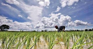 Kharif sowing in Gujarat