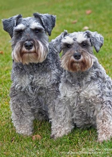Dog Groomer Salary Canada