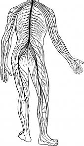 To promote our nervous system healthy