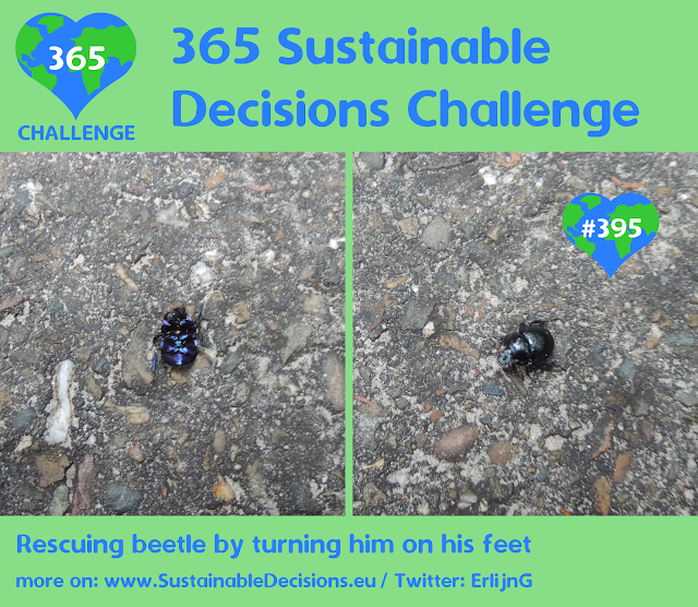 #395 - Rescuing beetle by turning him on his feet, sustainable living, sustainability, climate action