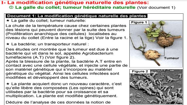 La modification génétique des plantes