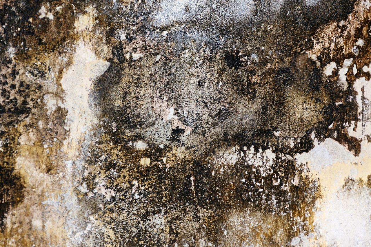 Preventing Mold In Your Home