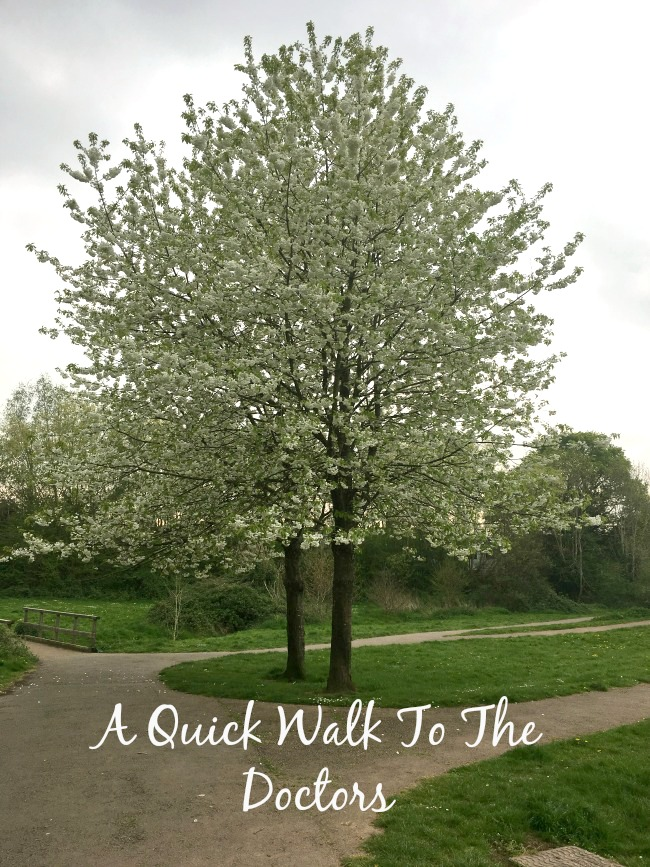 A-Quick-Walk-to-The-Doctors-text-on-image-of-trees-in-blossom