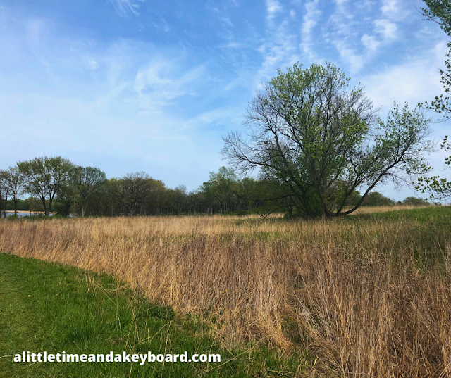 Sunny skies add to the beautiful landscape of Grassy Lake Forest Preserve.