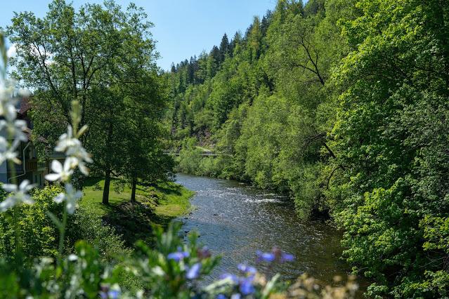 Premiumwanderweg Murgleiter | Etappe 4 von Schönmünzach nach Baiersbronn | Wandern nördlicher Schwarzwald 03