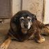 Απεβίωσε ο γηραιότερος σκύλος...