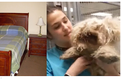 Groomer Shaving Poodles Under the Bed for 2 Years & the Rise of Cute Dogs